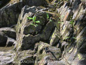 formikariet stenar inspiration