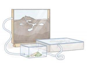 guide till myror min första myrkoloni formikarium