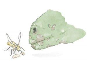 guide till myror min första myrkoloni historia