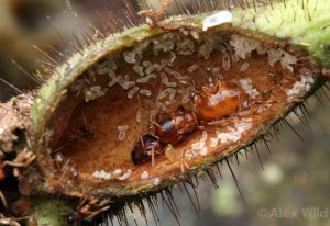 fakta om myror